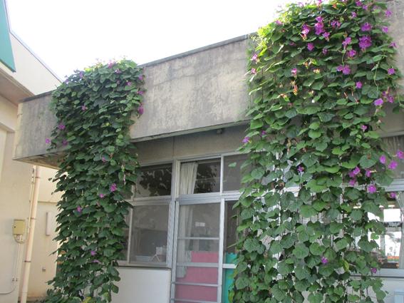 古沢保育所